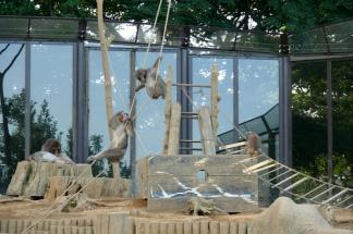 Monkeys at the Mount Takao enclosure