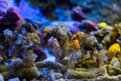 Okinawa Churaumi Aquarium Camo Crab