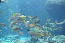 Okinawa Churaumi Aquarium Fish