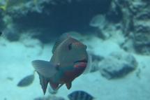 Okinawa Churaumi Aquarium Fishy