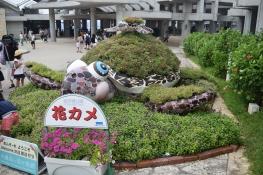 Okinawa Churaumi Aquarium Turtle Thing
