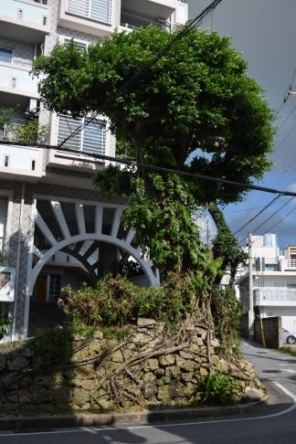 Okinawa Corner Tree