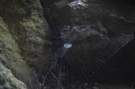 Okinawa Spider Web Spiral